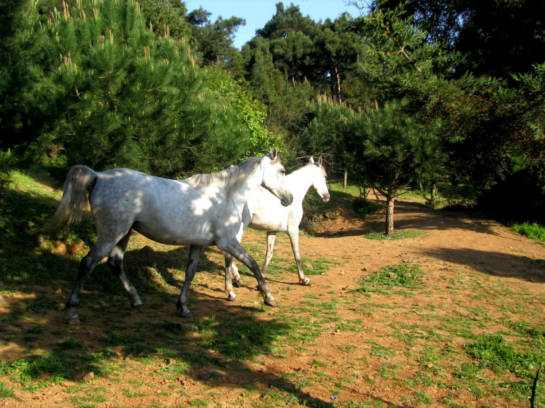 Konie na Büyükada jak smakują tureckie lody