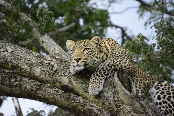 Atrakcje Kenii. 5 powodów, dla których warto odwiedzić krainę safari