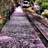 Poradnik dla podróżujących do Japonii