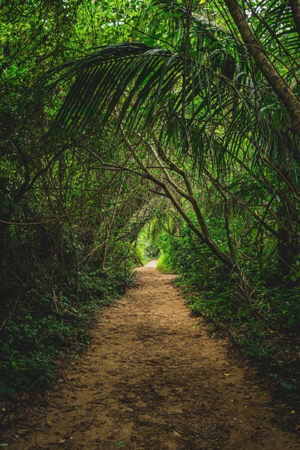 Park Cahuita, Kostaryka