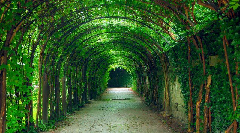 Tunel drzew w Salzburgu.