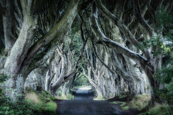 The Dark Hedges, Irlandia
