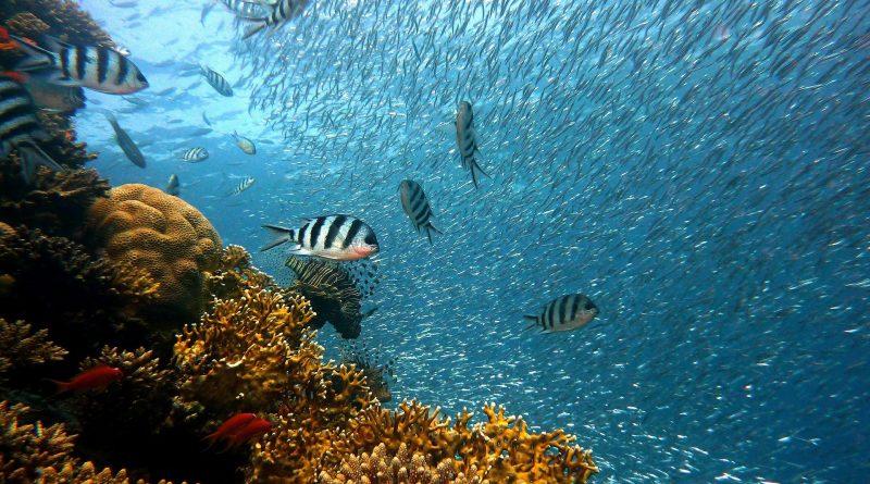 Rafa koralowa o wysokości 500 metrów! Nowe odkrycie nieopodal przylądka Jork