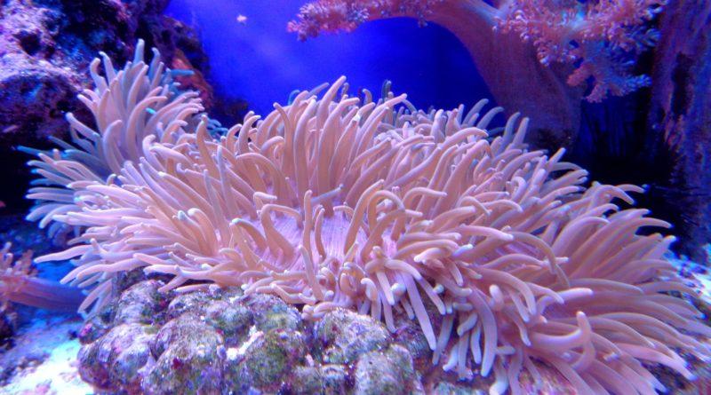Czeska turystka przewoziła w bagażu fragmenty rafy koralowej