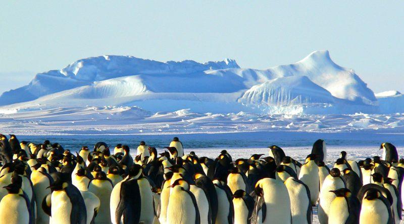Australia chce wybudować lotnisko na Antarktydzie