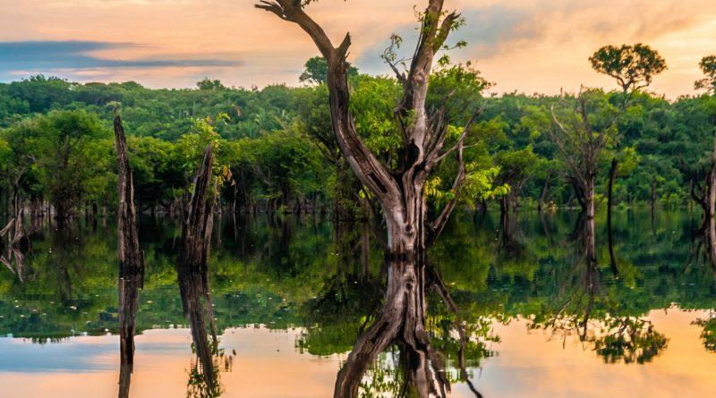 Lasy Amazonii mogą zamienić się w sawannę do 2064 roku